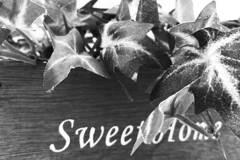Sweet Home(スイートホーム)