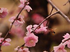 ガンバレ働き蜂