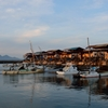 広島名産 牡蠣の打ち場