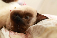 寝起きですけど。