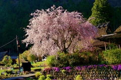 京都 美山 里山の春