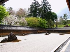 京都 龍安寺 桜と石庭