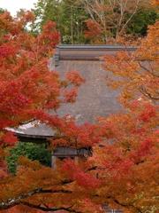 京都 大原 勝林院 見頃に迎え