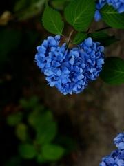 京都 夏のハートマーク