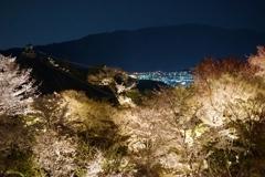 京都 将軍塚青龍殿 夜桜