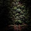 京都 貴船神社 聖なる水の世界