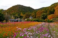 京都府 初秋の村
