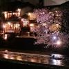 京都 鴨川の春浪漫