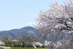 京都 賀茂川 大文字の飾り