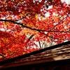 京都 もみじの光と影
