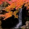 京都 円山公園 まさかの滝景色