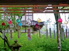 京都 松尾大社 夏の風鈴