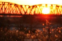 落陽に染まる