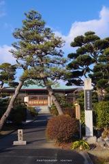 林泉寺の松