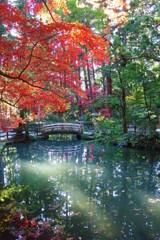 小國神社 白橋と紅葉