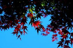 紅葉 - IMGP2164