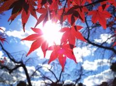 空と紅葉と -  IMGP0668