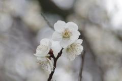 春はもうすぐ - IMGP1405