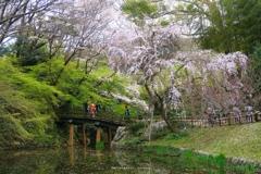 賑いは枝垂桜のもとで