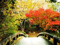 紅葉と橋と - IMGP0648