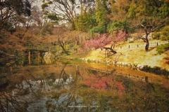 枝垂桜の咲く手前