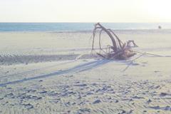 dream in the dunes