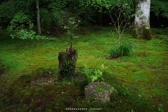 深緑の造形