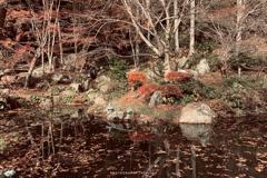 落葉浮く御池にて
