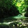 透き通る緑の渓流