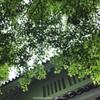 白壁に映る緑