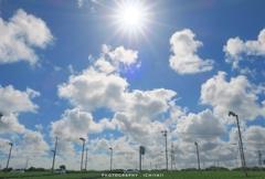 茶畑に夏の空