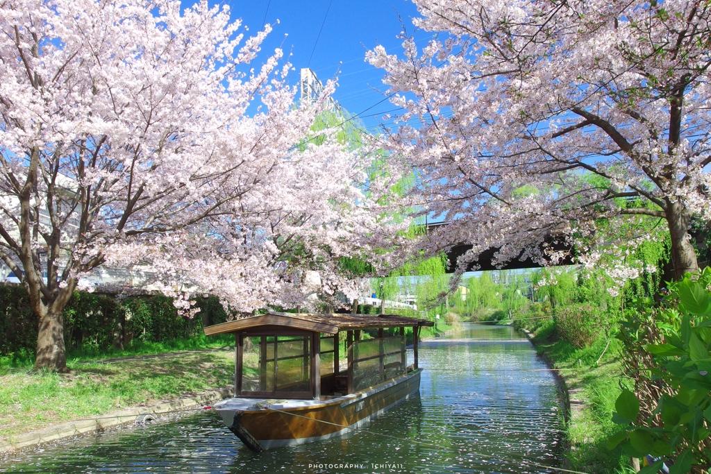 春の伏見情景