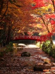 紅葉と紅橋 - DSC08357