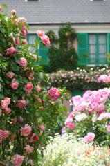 Rose Garden - DSC09968