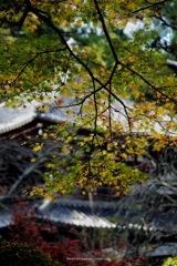 龍潭寺を彩る