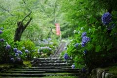 雨音響く紫陽花階段