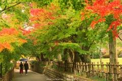 紅葉の中、青い傘のふたり