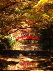 紅葉と紅橋 - DSC08352