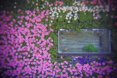 花中の水槽 - IMGP2366