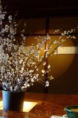 料理の前に桜を愉しむ - DSC09650