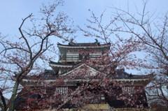桜纏う浜松城