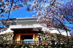 城門と桜 - IMGP1692