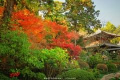 晩秋の龍潭寺