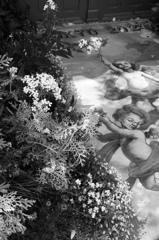 Engel der Blume - DSC09986