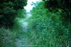散歩の抜け路