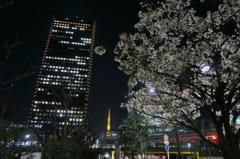浜松町の桜。東京タワーを背に。