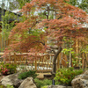小江戸川越のスターバックス その8 中庭の紅葉