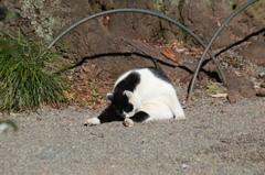 新宿御苑の猫その1