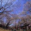 2015/03/30 川越喜多院の桜その2