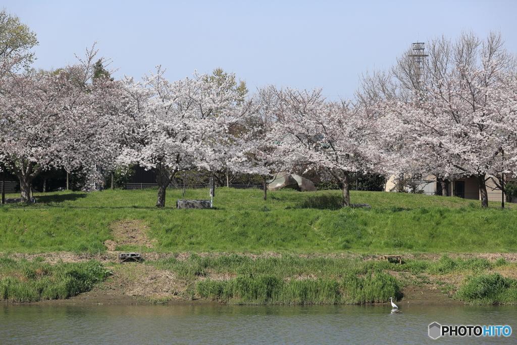 春の訪れ6